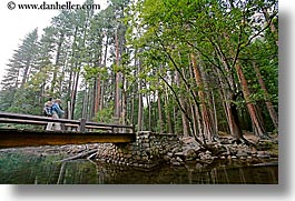bridge, california, forests, horizontal, jack and jill, nature, plants, redwoods, structures, trees, west coast, western usa, yosemite, photograph
