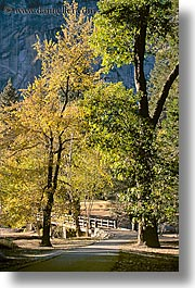 bridge, california, nature, plants, structures, trees, vertical, walking, west coast, western usa, yosemite, photograph