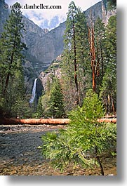 california, falls, nature, sapling, trees, vertical, water, waterfalls, west coast, western usa, yosemite, yosemite falls, photograph