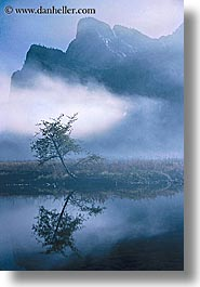 california, fog, foggy, mountains, nature, reflections, trees, vertical, water, west coast, western usa, yosemite, photograph