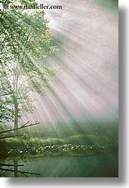 california, fog, foggy, lights, nature, reflections, sky, sun, sunbeams, sunrays, trees, vertical, water, west coast, western usa, yosemite, photograph