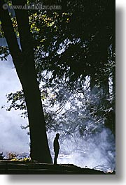 california, fog, foggy, nature, people, silhouettes, trees, vertical, west coast, western usa, yosemite, photograph