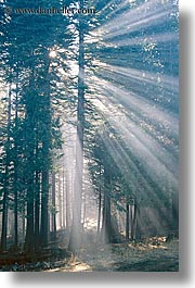 california, fog, foggy, lights, nature, sky, slant, sun, sunbeams, sunrays, trees, vertical, west coast, western usa, yosemite, photograph