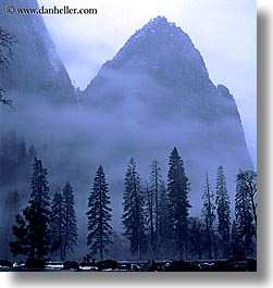 california, eve, fog, foggy, mountains, nature, square format, trees, west coast, western usa, yosemite, photograph