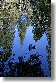 california, lakes, mirror lake, nature, plants, reflecting, reflections, trees, vertical, water, west coast, western usa, yosemite, photograph