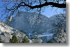 branches, california, half dome, horizontal, mountains, nature, plants, trees, west coast, western usa, yosemite, photograph