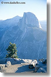 california, half dome, mountains, nature, trees, vertical, west coast, western usa, yosemite, photograph