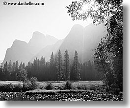 black and white, california, horizontal, morning, mountains, nature, plants, trees, west coast, western usa, yosemite, photograph