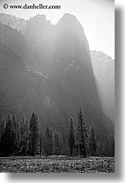 black and white, california, morning, mountains, nature, plants, trees, vertical, west coast, western usa, yosemite, photograph