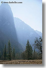 california, morning, mountains, nature, plants, trees, vertical, west coast, western usa, yosemite, photograph