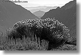 black and white, california, flowers, horizontal, layered, mountains, nature, west coast, western usa, wildflowers, yosemite, photograph