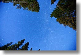 california, horizontal, long exposure, nature, nite, plants, sky, star field, stars, trees, upview, west coast, western usa, yosemite, photograph