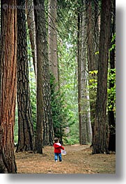 babies, boys, california, childrens, forests, nature, people, plants, toddlers, trees, vertical, west coast, western usa, woods, yosemite, photograph