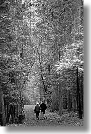 black and white, california, couples, nature, paths, people, plants, redwood trees, redwoods, sequoia, trees, vertical, walk, west coast, western usa, yosemite, photograph