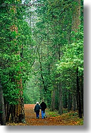california, couples, nature, paths, people, plants, redwood trees, redwoods, sequoia, trees, vertical, walk, west coast, western usa, yosemite, photograph