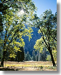 archways, california, nature, plants, trees, vertical, west coast, western usa, yosemite, photograph