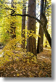 archways, california, fall foliage, nature, plants, trees, vertical, west coast, western usa, yosemite, photograph