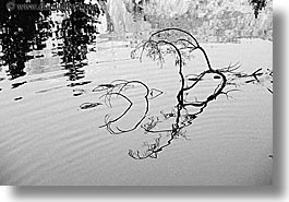 black and white, branches, california, horizontal, nature, plants, reflect, reflections, rivers, trees, water, west coast, western usa, yosemite, photograph