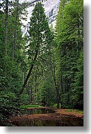 california, curved, forests, nature, plants, stream, trees, vertical, west coast, western usa, yosemite, photograph