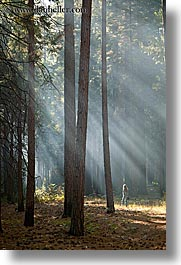 california, forests, nature, plants, sky, sun, sunbeams, sunrays, trees, vertical, west coast, western usa, yosemite, photograph