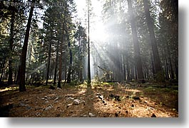 california, forests, horizontal, nature, plants, sky, sun, sunbeams, sunrays, trees, west coast, western usa, yosemite, photograph