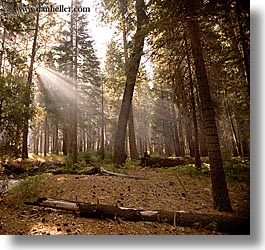 california, forests, nature, plants, sky, square format, sun, sunbeams, sunrays, trees, west coast, western usa, yosemite, photograph