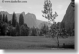 black and white, california, horizontal, leaning, mountains, nature, plants, trees, west coast, western usa, yosemite, photograph