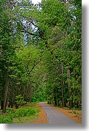 california, forests, nature, paths, paved, plants, trees, vertical, west coast, western usa, yosemite, photograph