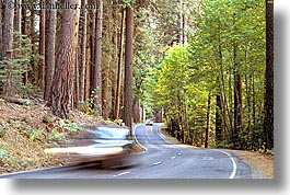 california, cars, forests, horizontal, motion blur, nature, plants, roads, transportation, trees, west coast, western usa, yosemite, photograph