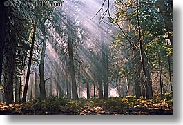 california, horizontal, lights, nature, plants, streaming, sunrays, trees, west coast, western usa, yosemite, photograph