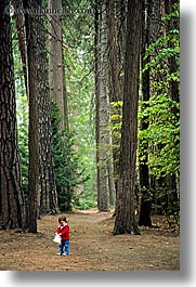 babies, boys, california, forests, toddlers, trees, vertical, west coast, western usa, woods, yosemite, photograph