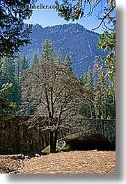 bridge, california, nature, plants, structures, trees, vertical, west coast, western usa, yosemite, photograph