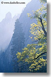 california, mountains, nature, plants, trees, vertical, west coast, western usa, yosemite, photograph