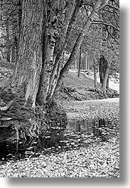 black and white, california, nature, plants, river bank, stream, trees, vertical, water, west coast, western usa, yosemite, photograph