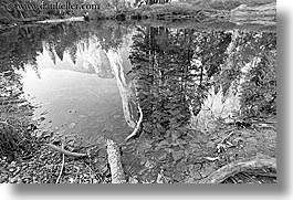 black and white, california, grand, horizontal, logs, nature, plants, reflections, rivers, trees, water, west coast, western usa, yosemite, photograph