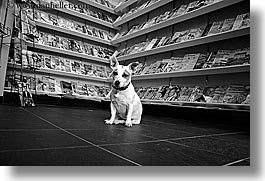 black and white, canada, dogs, horizontal, magazines, people, stores, vancouver, photograph
