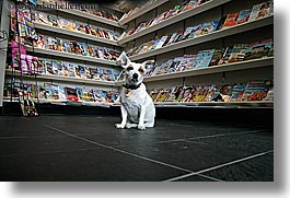 canada, dogs, horizontal, magazines, people, stores, vancouver, photograph