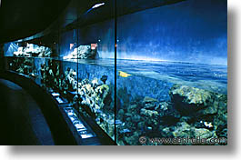 amsterdam, aquarium, europe, horizontal, zoo, photograph