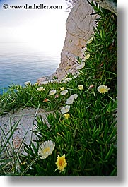 cliffs, croatia, dubrovnik, europe, flowers, ocean, vertical, photograph