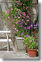 croatia, dubrovnik, europe, flowers, potted, vertical, photograph