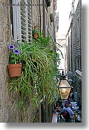 croatia, dubrovnik, europe, flowers, spider plant, vertical, walls, photograph
