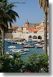 boats, croatia, dubrovnik, europe, harbor, palmtree, rooftops, towns, trees, vertical, photograph