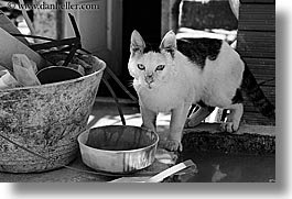 black and white, bowls, cats, croatia, dubrovnik, europe, horizontal, photograph