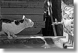 black and white, cats, croatia, dubrovnik, europe, horizontal, humor, spigot, water, photograph