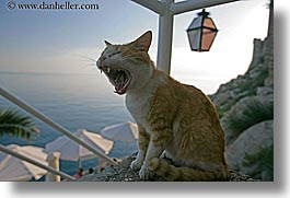 cats, croatia, dubrovnik, europe, horizontal, humor, laughing, yawn, photograph