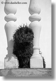 balusters, black, black and white, croatia, dogs, europe, groznjan, vertical, white, photograph