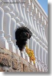 balusters, black, croatia, dogs, europe, groznjan, vertical, white, photograph