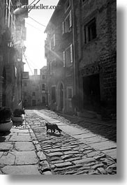 black and white, cats, cobblestones, croatia, europe, groznjan, materials, narrow streets, roads, stones, streets, vertical, photograph