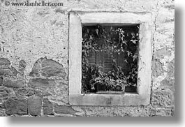 black and white, croatia, europe, green, groznjan, horizontal, plants, stones, walls, photograph