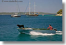 boats, croatia, dogs, europe, horizontal, hvar, men, ocean, speedboat, water, photograph
